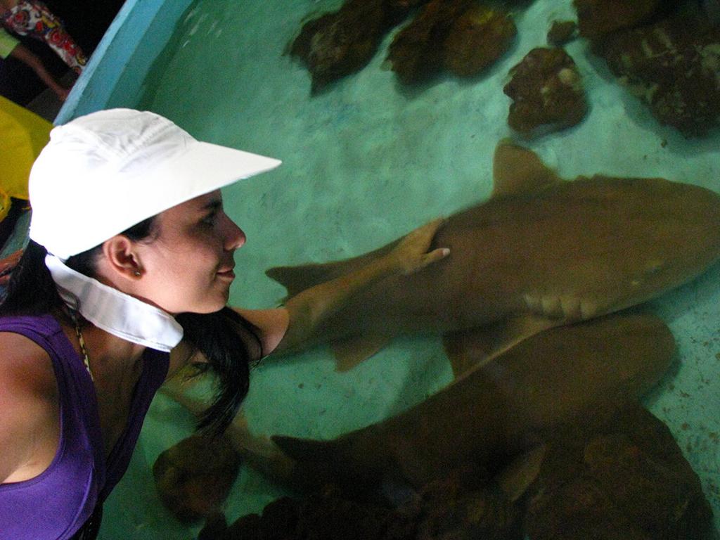 Tubarões no Aquário de Natal/RN