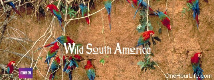 wild-south-america
