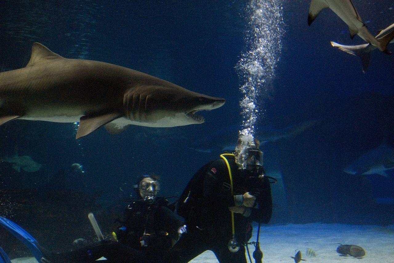 seguro de viagem, mergulho com tubarões