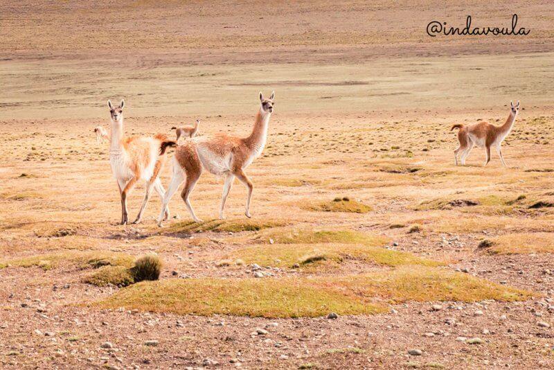 Roteiro na Patagônia de carro - 10 dias entre Chile e Argentina