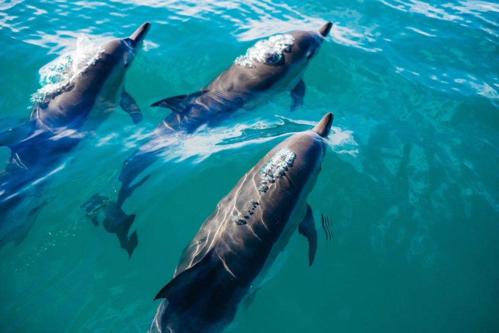 da minha travel bucket list - mergulhar com golfinhos em fernando de noronha