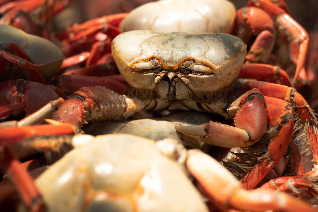 comidas típicas maranhenses - caranguejo e caranguejada